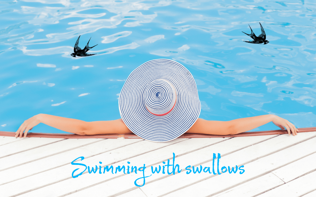 Swimming with swallows - image