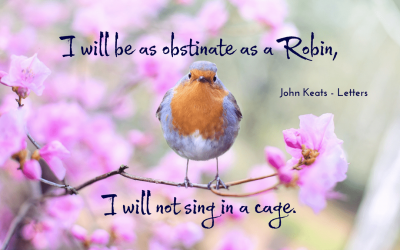 As obstinate as a robin