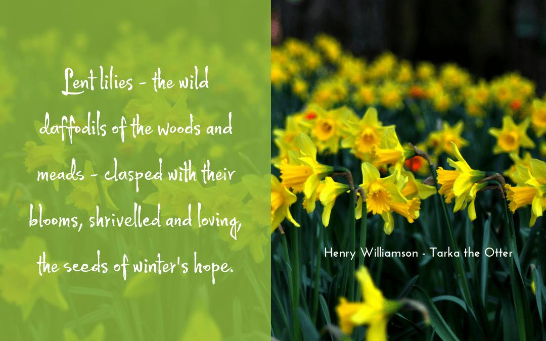 quotation - Tarka the Otter - Henry Williamson
