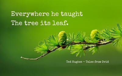 Teaching the tree